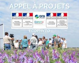 image Appels_a_projets_RI1_2.jpg (0.5MB) Lien vers: https://ecophytopic.fr/pour-aller-plus-loin/appel-projets-national-ecophyto-2020-2021-volets-1-et-2