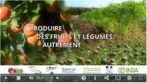 image CaptureFilmSDCultinnovants2018.png (0.5MB) Lien vers: https://www.gis-fruits.org/Page-d-accueil/Actualites/Le-film-Produire-des-fruits-et-legumes-autrement-vient-de-sortir