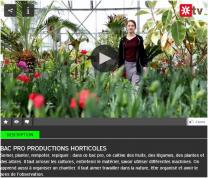 image CapturerVideoBacProHorti2018.jpg (0.1MB) Lien vers: https://oniseptv.onisep.fr/video/bac-pro-productions-horticoles